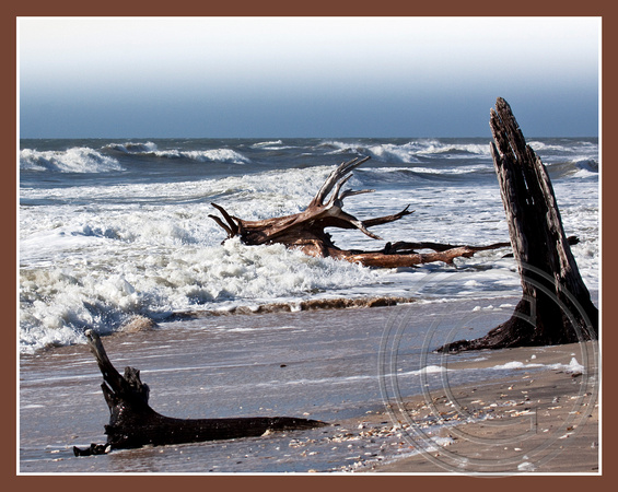 Waves and driftwood